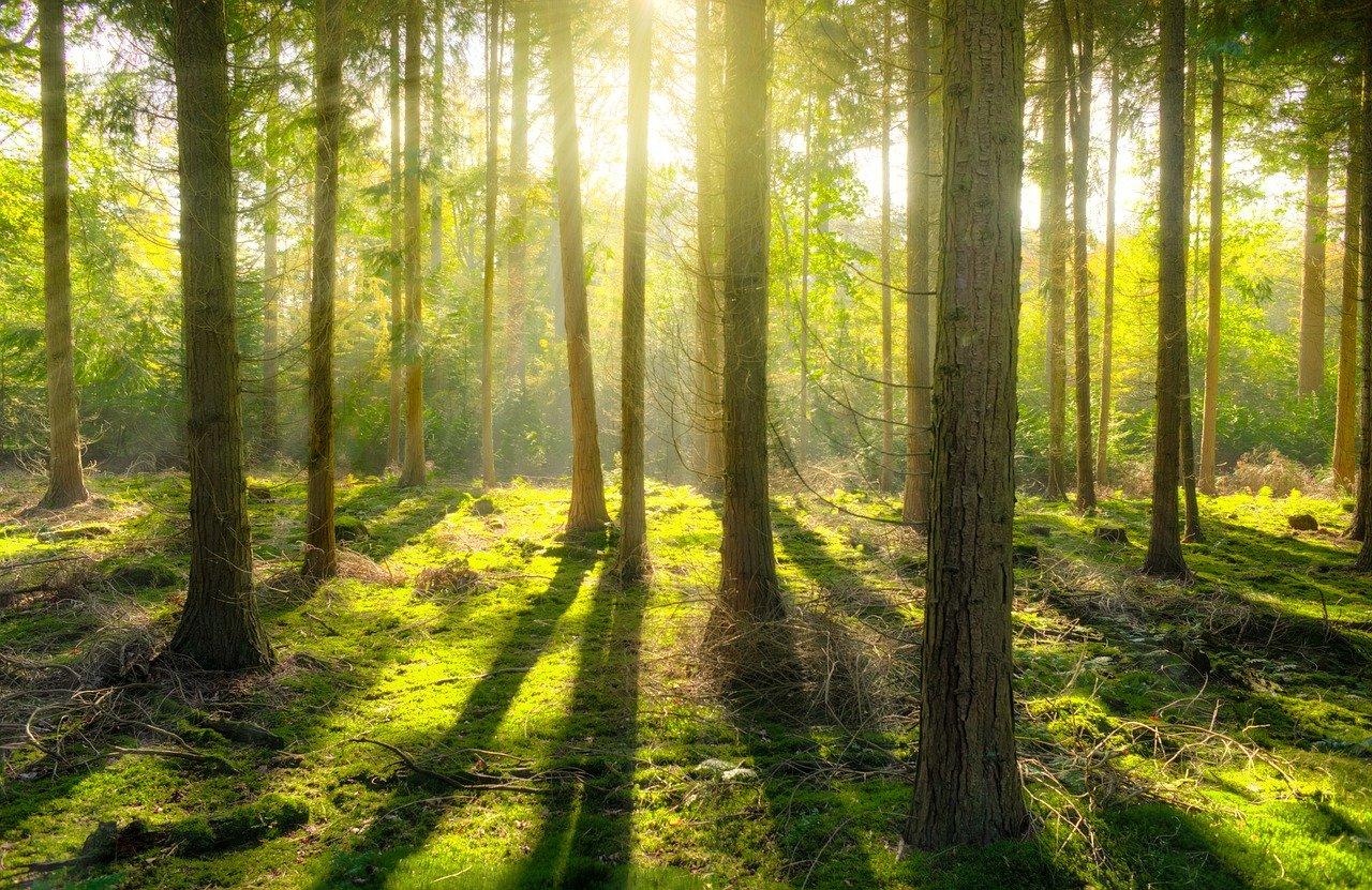 アイキャッチ森の影