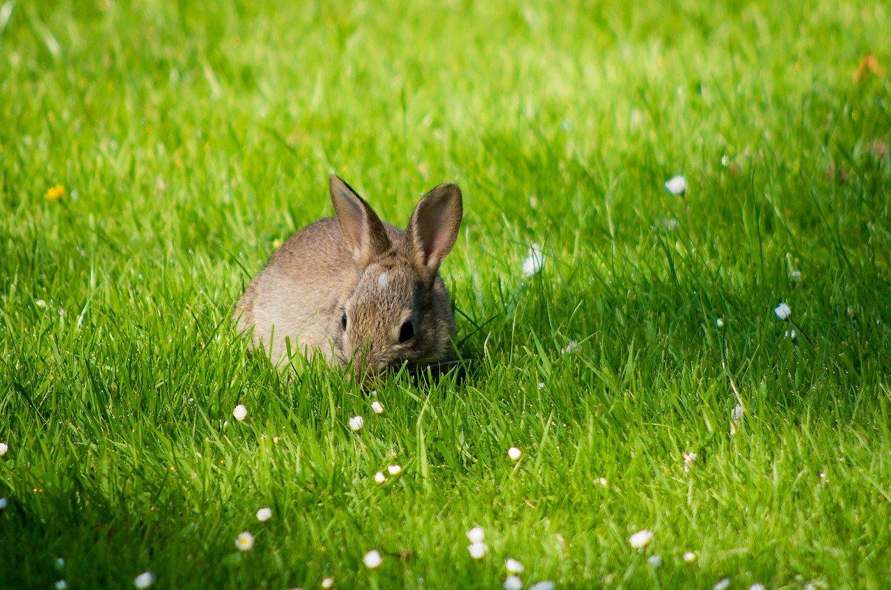 rabbitfire